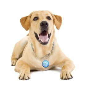 puppy-tweets-2