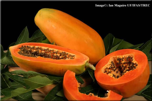 papaya-lg